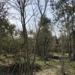 庭造りワークショップ用の樹木を仕入れます