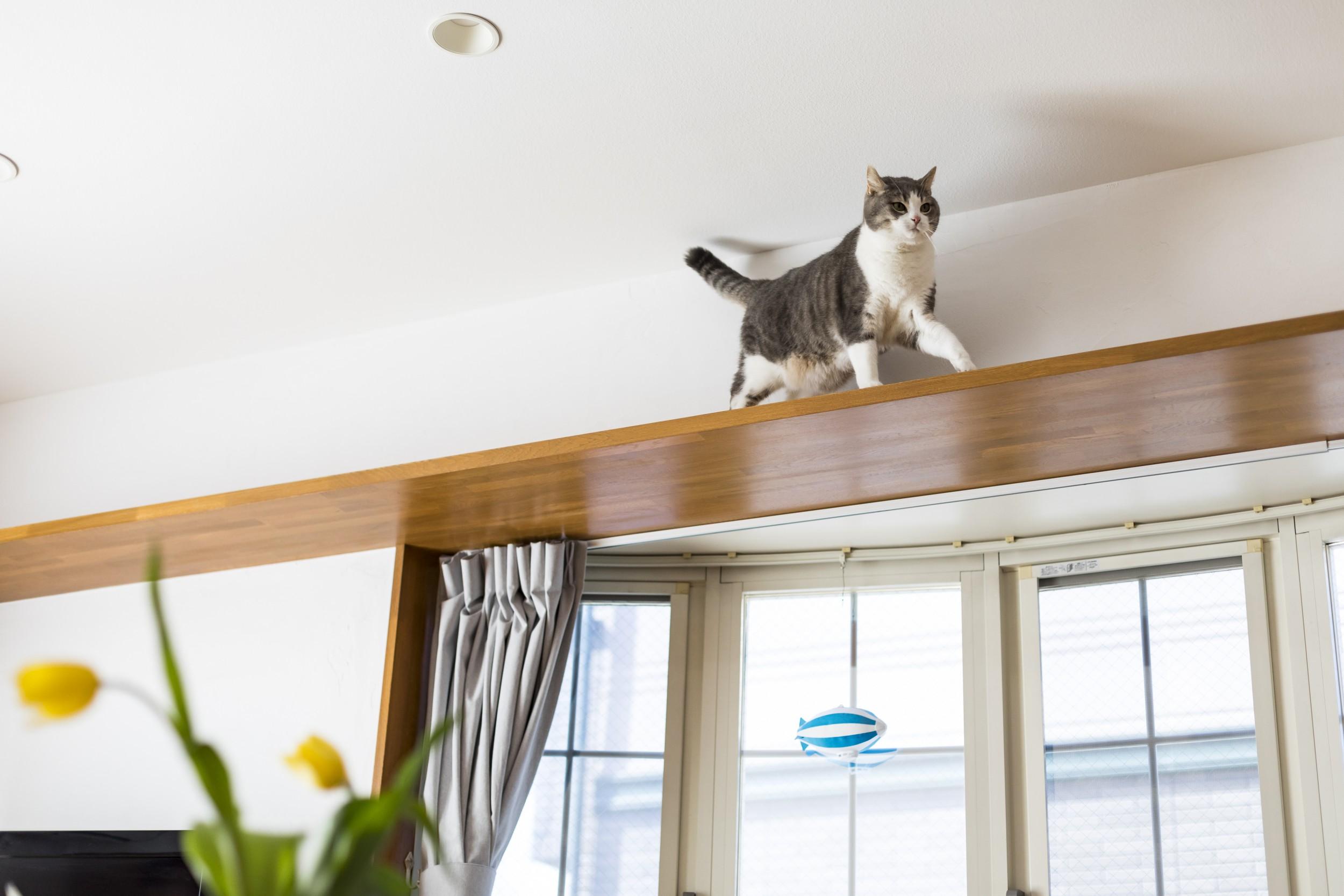 岐阜市Y様邸リノベーション事例のキャットウォークを楽しむ猫ちゃん