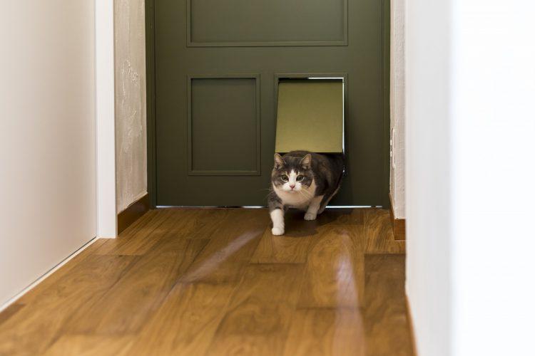 岐阜市リノベーション戸建て事例のオーダーメイドキャットドアを使う猫