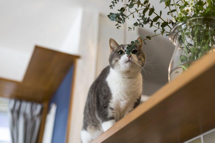 岐阜市リノベーション戸建て事例のカウンターと猫