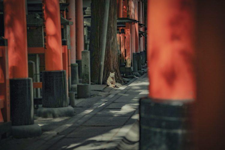 京都の伏見稲荷大社の猫