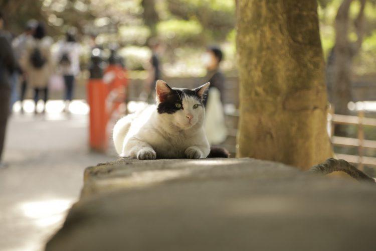 京都の伏見稲荷大社の猫2