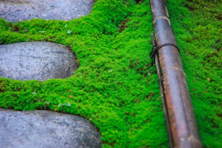岐阜市にある真長寺の竜安寺の石庭と同じ様式のお庭の苔