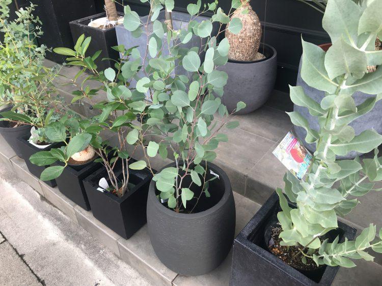 岐阜市のお花屋さんグリーンヴェールの観葉植物