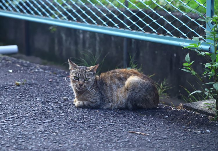 鏡島城跡散策で見つけた猫