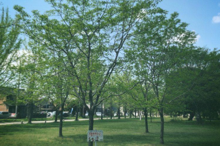 各務原学びの森の広場の木